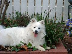 Oskar in the Flowerbed